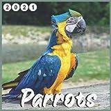 Parrots: 2021 wall & Office Calendar 16 Monthe Sep.2020 to Dec.2021