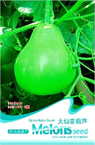 Pinkdose® 2018 Heißer Verkauf Winebibber Große Löffel Flasche Kürbis Essbare Bio Gemüsesamen, Original Pack, 8 Samen/Pack, Leckeres Calabash Ornamental