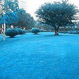 Tomasa Samenhaus- Rasensamen Sport- Spielrasen winterhart Mehrjährige Grassamen Rasensaat Hausgarten Hof Immergrüne Rasenpflanzen