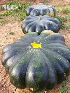 30 Puerto Rican Calabaza, Pumpkin Female seeds by Prorganics by Prorganics