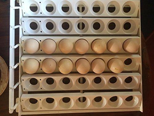Ayam Cemani Pure Fertile Hatching Eggs Raised on Organic (3 Eggs)