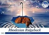 Rhodesian Ridgeback - kreativ in Szene gesetzt - (Wandkalender 2021 DIN A3 quer)