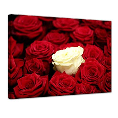Wandbild - Weiße Rose - Bild auf Leinwand 60 x 50 cm - Leinwandbilder Bilder als Leinwanddruck Pflanzen & Blumen Natur Weisse Rose - rote Rosen