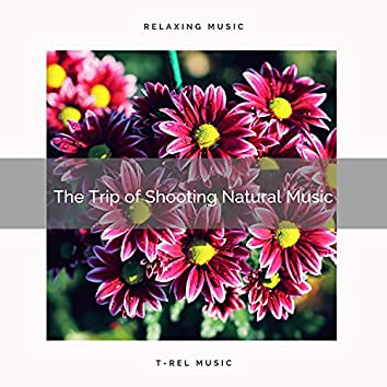 ! ! ! ! The Trip of Soothing Natural Music