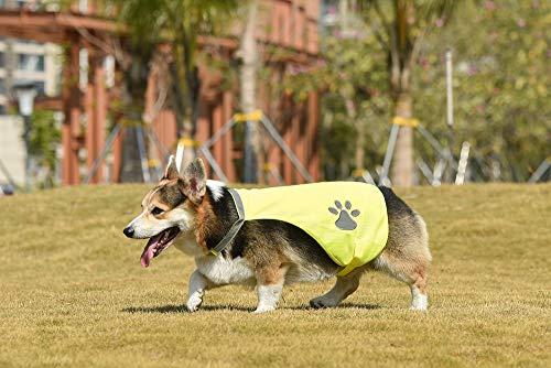 Hunde Sicherheitsweste (7Größen) - Hohe Sichtbarkeit für Outdoor Aktivitäten Tag und Nacht, Hält den Hund Sichtbar, Sicher vor Autos & Jagtunfällen | Blaze Orange (35, Gelb)