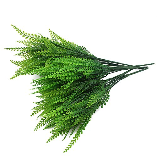 JaneYi Plantas