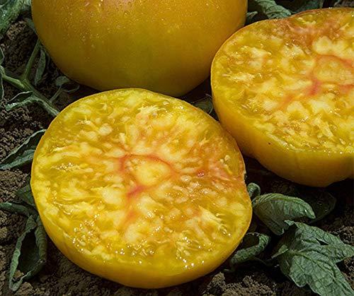 Bobby-Seeds Tomatensamen Ananas Portion