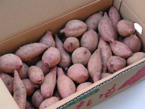 本場種子島産 安納芋 (2S-Sサイズ) 5kg