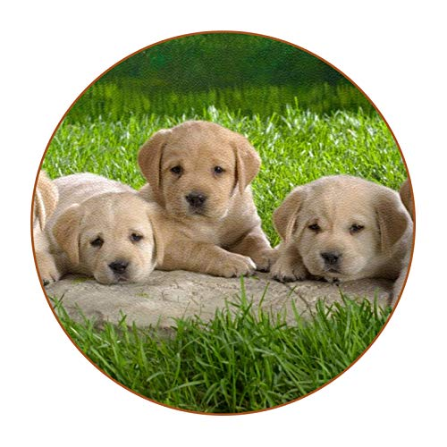 Coasters for Drinks Cute Puppy Dog 6Pcs Funny Coasters, Housewarming Gifts New Home Hostess Gifts for Presents, Kitchen, Home Living Room Decor, Table Bar Decorations 4.3 in