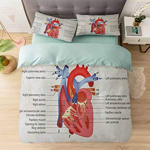 Aishare Store Duvet Cover Sets, Medical Structure of The Hearts Human Body Anatomy Organ Veins Cardiolog, Comforter Cover Bedding Set 3 Pieces (1 Duvet Cover + 2 Pillow Shams), Coral Red Blue