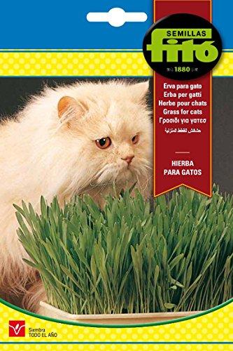 Semillas Fitó 4262 - Hierba para Gatos