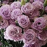 Fnho Perennes Resistentes para balcón,Semillas Ornamentales de Hierba,Balcón Flores en Maceta, Flores de jardín (200 PCS) -C