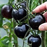 Vajra seeds F1 Hybrid Vegetable American Black Tomato 50+ Seeds Packet
