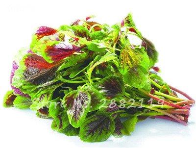 Herb Amaranthus Tricolor Seeds 50 Pcs graminée Semente non Ogm végétale comestible Bonsai Plante en pot sain sucré 6
