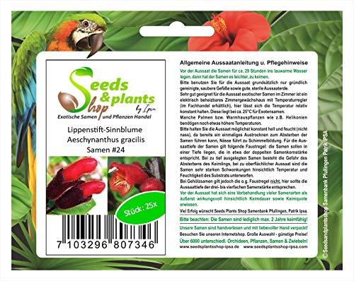Stk - 25x Lippenstift Sinnblume Aeschynanthus gracilis Pflanzen - Samen #24 - Seeds Plants Shop Samenbank Pfullingen Patrik Ipsa