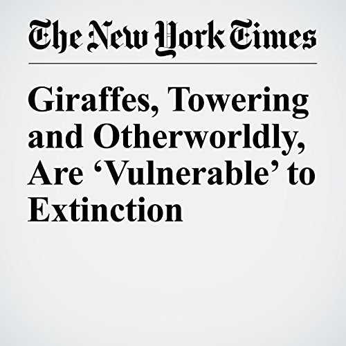 Giraffes, Towering and Otherworldly, Are 'Vulnerable' to Extinction audiobook cover art