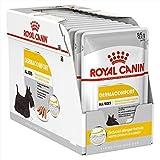 ROYAL CANIN Dermacomfort Wet - 12 x 95 g