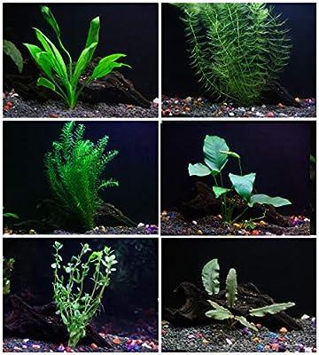 25+ stems / 6 species Live Aquarium Plants Package - Anacharis, Amazon and more!