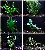 25+ Stems / 6 Species Live Aquarium Plants Package - Anacharis, Amazon and...