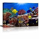 wall26 Leinwandbild, Motiv: Korallenriff und Tropische