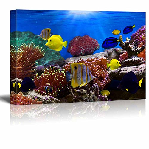Canvas Wall Art - Coral Reef and Tropical Fish Under The Ocean | Modern Home Art Canvas Prints Gallery Wrap Giclee Printing & Ready to Hang - 24' x 36'