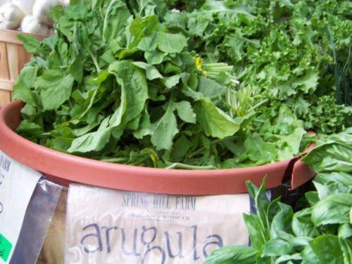 Arugula, Roquette, Verts salade, 235 graines! Groco