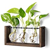 Mkono Plant Terrarium with Wooden Stand, Wall Hanging Glass Planter Desktop Propagator Bulb Vase Metal Swivel Holder Retro Rack for Hydropoincs Plants Home Office Decor?5 Bulb Vase?