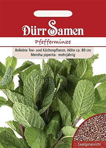 Dürr-Samen - 100 x Pfefferminze Saatgut für Küche, Balkon & Hochbeet - Pfefferminzsamen zum Pflanzen für Kräutergarten - Peppermint Minze Samen - Pfefferminz Gewürz- & Kräutersamen Saat zum Anbauen