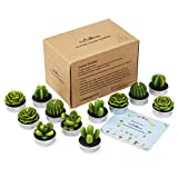 Cactus Tealight Candles,12 Pieces Handmade Delicate Succulent Cactus Candles for Party Wedding Spa Home Decoration Gifts