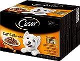 Hunde Nassfutter Vergleich Cesar