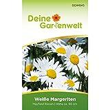 Margerite weiß Samen - Chrysanthemum maximum - Margeritensamen - Blumensamen - Saatgut