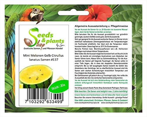 Stk - 20x Mini Melonen Gelb Citrullus lanatus Obst Pflanzen - Samen #137 - Seeds Plants Shop Samenbank Pfullingen Patrik Ipsa