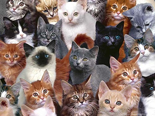 Puzzel Voor Volwassenen 1000 Stukjes, Verschillende Soorten Katten, Schattige Huisdieren,Kinderen Speelgoed Geschenken