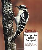 Woodpecker in the Backyard