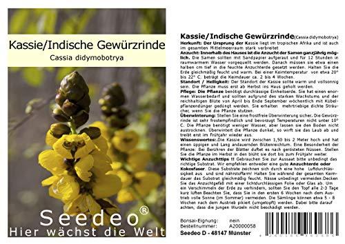 Seedeo® Kassie/Indische Gewürzrinde (Cassia didymobotrya) 20 Samen