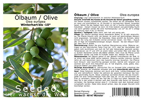 Seedeo® Olive/Ölbaum (Olea europaea) 20 Samen
