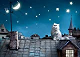 1art1 Katzen - Katze Auf Dem Dach Fototapete Poster-Tapete 160 x 115 cm