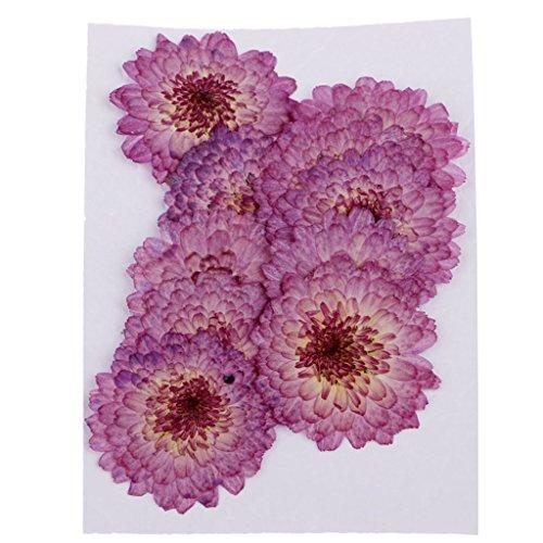Fliyeong 10 Stück lila Gänseblümchen getrocknete gepresste Blumen handgemachte echte Blumen Fall für Telefon Dekoration DIY langlebig und nützlich