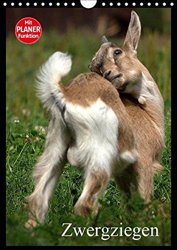 Zwergziegen (Wandkalender 2019 DIN A4 hoch): Die hier wohl bekannteste unter den Ziegen (Planer, 14 Seiten ) (CALVENDO Tiere)