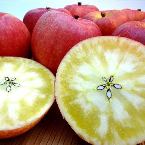 青森県産 蜜入りりんご こみつ 2kg(13玉入り)