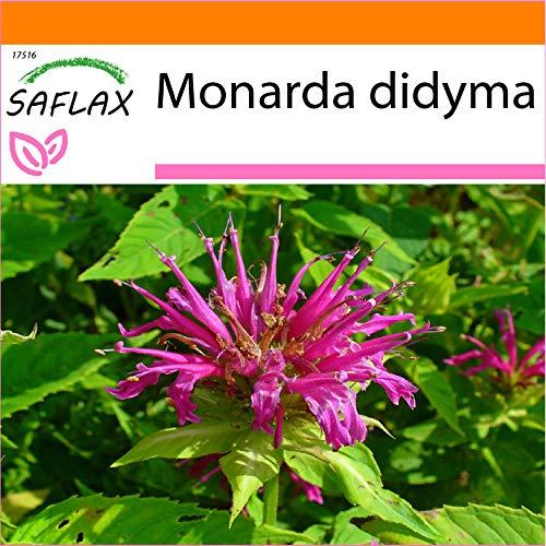 SAFLAX - Garden in the Bag - Kräuter - Goldmelisse - 20 Samen - Mit Anzuchtsubstrat im praktischen, selbst aufstellenden Beutel - Monarda didyma