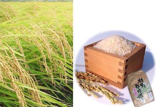 新潟県産 白米 特別栽培米 内山農園 ミルキークイーン 5キロ 令和元年産
