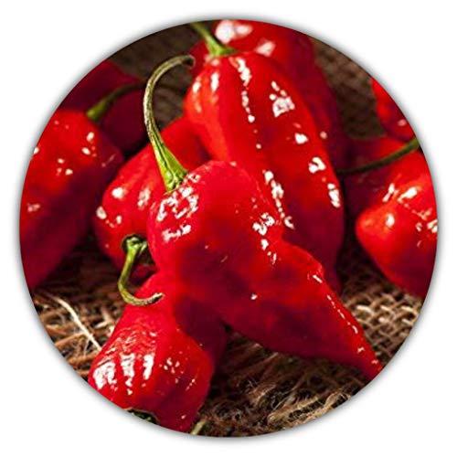 Bhut Jolokia Red - ca. 50 Samen - Pflanze Trägt Extrem Scharfe Chili - Für Die Anzucht Zu Hause - Chilis Mit Bis Zu 1 Million Scoville