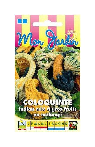 Les Graines Bocquet - Graines De Coloquinte Indian Mix Gros Fruits - Graines Potagères À Semer - Sachet De 3Grammes