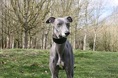 Exclusivos collares anchos acolchados de piel de oveja negra y ante suave – Whippet, galgo, Lurcher y perro italiano Saluki Sighthound (grande)