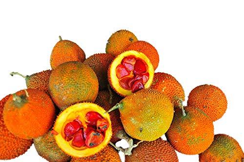 Baby Jackfrucht -Momordica cochinchinensis- ''Gacfrucht'' 3 Samen