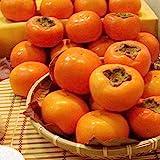 30 piezas de fruta de caqui árboles Plantas suculentas semillas de fruta de caqui