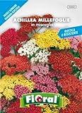 sementi da fiore di qualità in bustina per uso amatoriale (achillea millefoglie in miscuglio)