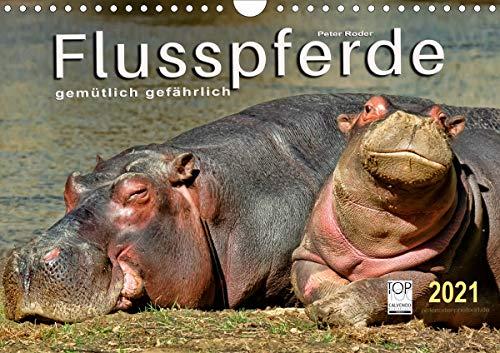 Flusspferde - gemütlich gefährlich (Wandkalender 2021 DIN A4 quer)