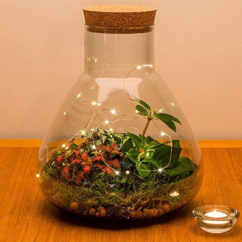 De Urban Botanist Cork verzegeld Ecosystem Conical Terrarium Flask met levende tropische planten